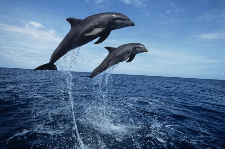 поплавать с дельфинами в Сочи