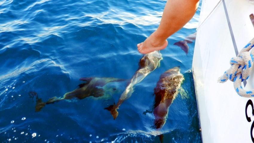 Морская прогулка с дельфинами